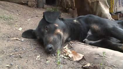 Боевые четвероногие друзья: как животные помогают на фронте военным – милые фото и видео