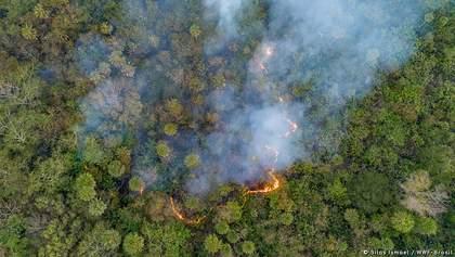 Масштабні пожежі в Бразилії: під загрозою вимираючі види тварин