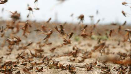 Не счесть белых мух: полчища мошек атаковали российский Красноярск – впечатляющее видео