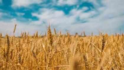 Через екологію врожай зернових в Україні знизиться щонайменше на 5 млн тонн, – ЗМІ
