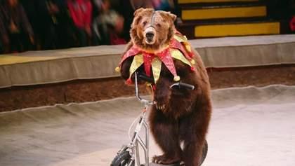 В Чехии запретят цирки с животными
