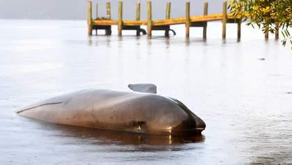 Биологи назвали причину самого массового выброса на берег дельфинов-гринд в Австралии