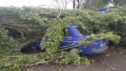 В Херсонской области ураган повалил деревья: фото