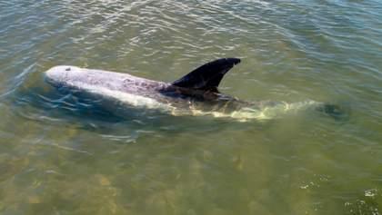 Дельфина спасли в Азовском море: трогательное видео