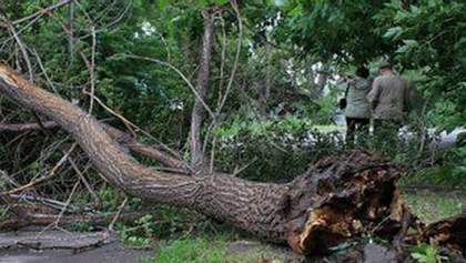 В Украине бушует циклон Зора, есть пострадавшие: фото, видео последствий непогоды