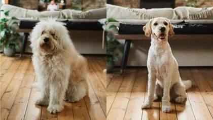 20 примеров, когда стрижка изменила собак до неузнаваемости: владельцы шокированы – смешные фото