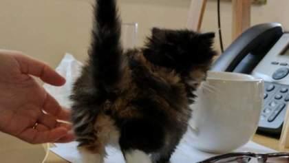 Женщина принесла котенка на работу: милые фото