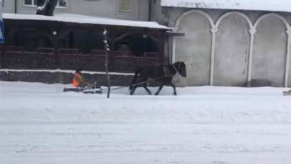 Прокатился с ветерком: на Львовщине коммунальщик убирал снег на лошади – смешное видео
