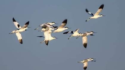 Одесский заповедник посетили редкие птицы – чеботари: фото
