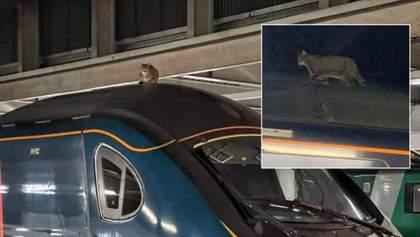 Хвостатый хулиган: в Великобритании кот задержал поезд на 2,5 часа