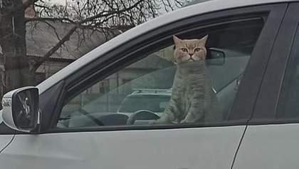 Кіт був за кермом: у Києві під час затору зробили кумедне фото
