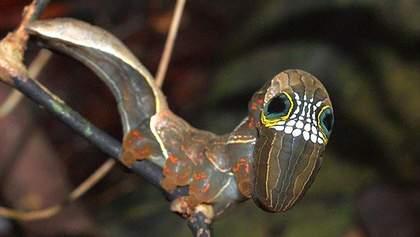 Щоб захиститися від хижаків: кумедні фото рідкісної гусениці, яка імітує череп