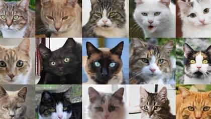 Людство у небезпеці: штучний інтелект навчився генерувати реалістичні фотографії котиків