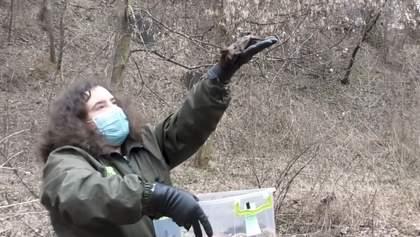 У Києві із зоопарку випустили кажанів: відео