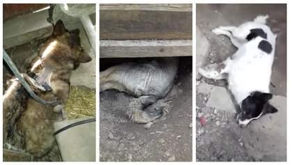 На Вінниччині шкуродер убив 3 собак: Геращенко пообіцяв покарати покидька