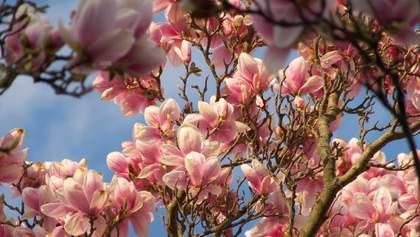 Долина черных тюльпанов и не только: цветущие локации Львовщины, которые стоит посетить