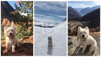 Гуляє Альпами та відвідує замки: собака-мандрівниця, яка подорожує більше, ніж деякі люди – фото