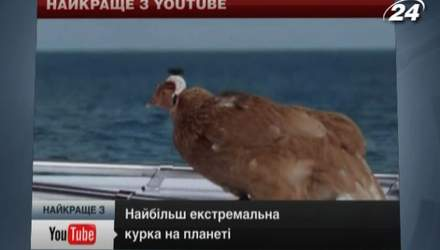 Самая экстремальная курица на планете