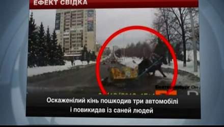 Курйози на дорогах Росії: відкритий люк та оскаженілий кінь спричинили аварії