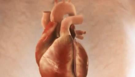 Факти про здоров'я. П'ять правил для здорового серця