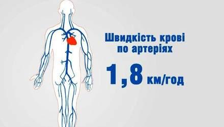 Лінія життя. Від складу крові залежить стан всього організму