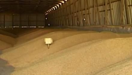 Цього року Україна зможе експортувати 37 млн тонн зернових
