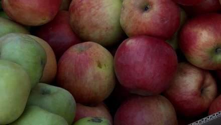 В Україні зростає пропозиція імпортного яблука