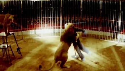 Чоловік вижив, побувавши в пащах розлючених левів