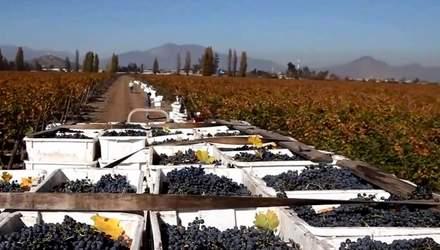 Как чилийские вина завоевали мир