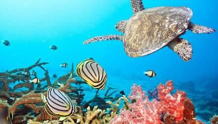 Чим приваблює туристів Червоне море