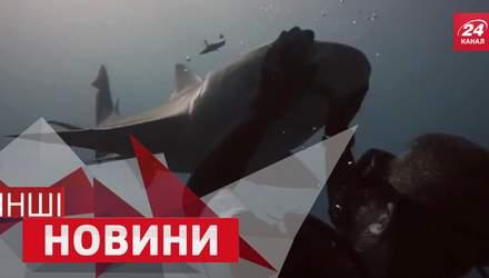 ІНШІ новини. Акула, яка любить лестощі. Електросамокат, який везе сам