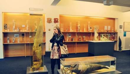 Топ-15 причудливых музеев мира, которые вас удивят своим существованием