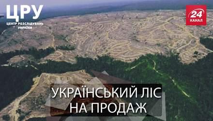 Вкрадений ліс: заради кого і чого нещадно рубають Карпатські ліси