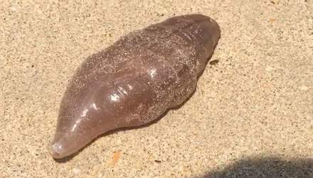 Дивну істоту винесло на берег у Таїланді: відео