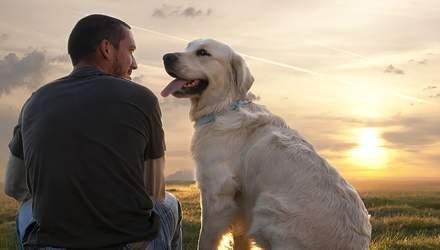 Вчені довели, що собаки вміють розрізняти людські емоції