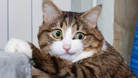 Кішка розвеселила мережу яскравими емоціями, незважаючи на проблеми із здоров'ям