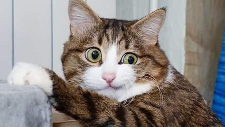 Кошка развеселила сеть яркими эмоциями, несмотря на проблемы со здоровьем
