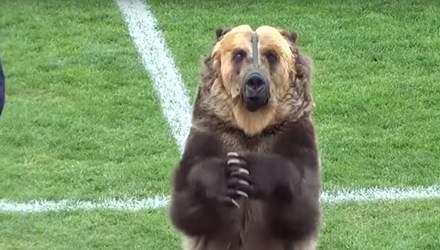 В России настоящий медведь открыл футбольный матч