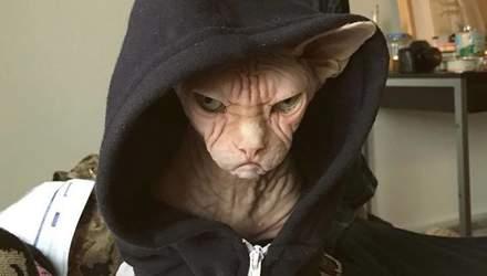 Постоянно рассерженный кот стал звездой сети: фото