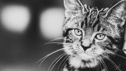 Чому кошенята видаються милими: пояснення науковців