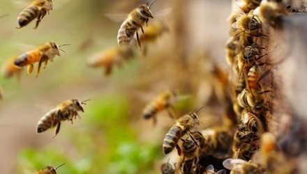Бджоли зірвали рейс літака з Москви до окупованого Криму
