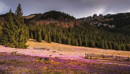 Дивовижні гори в Польщі підкорили своєю красою: весняні фото