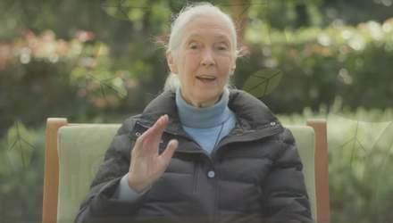 В День Земли Google посвятил новый дудл Джейн Гудолл: кто она