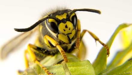Що робити, якщо комаха вкусила в око