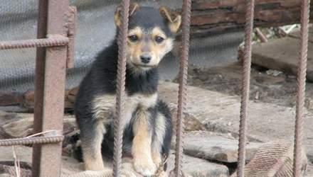 Конвейер смерти: почему в Украине массово убивают бездомных животных
