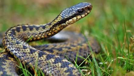 Що робити, якщо вкусила змія: перша допомога