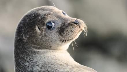 Ученые необычным способом измерили температуру воды в Антарктиде: им помогли тюлени