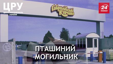 """""""Гаврилівські курчата"""": что же на самом деле стоит за успешным брендом"""