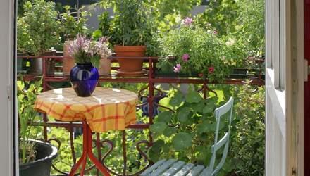 Для балкона или сада: 3 растения, которые цветут в течение всего лета