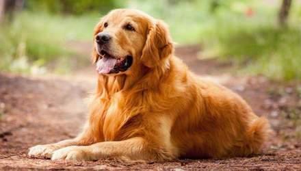 Попередив бійку: мережу підірвало кумедне відео із собакою-охоронцем